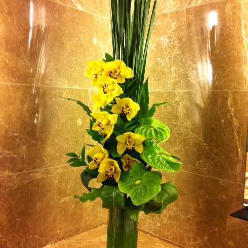 Holland Orchids $680