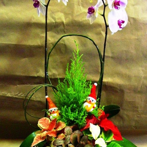 Taiwan Orchids with X'mas plant $888$